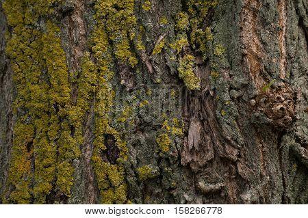 Close-up of a tree bark. tree bark. Bark of a tree