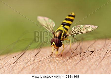 Bee On Skin