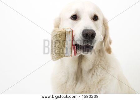 Painting Dog