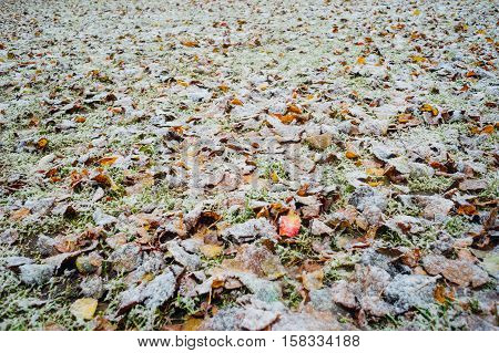 Grass and fallen leaves covered with snow natural background. Season change concept