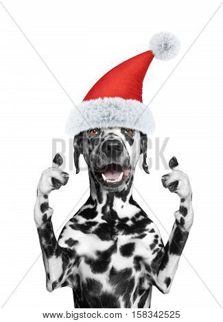 Santa dog showing thumb up and welcomes -- isolate on white