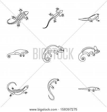 Types of iguana icons set. Outline illustration of 9 types of iguana vector icons for web