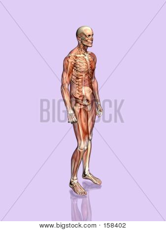 Anatomie einer muscular Man transparent mit Skelett.