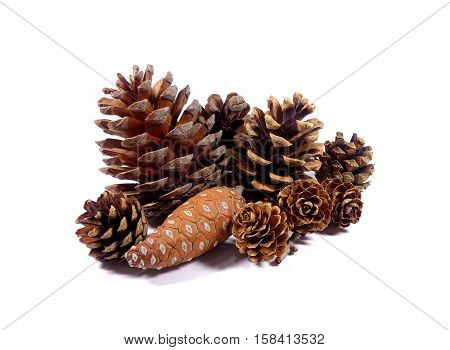 Close-up several types of natural dry pine cones' collection isolated on white background
