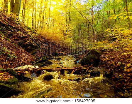 Stream in deciduous forest during autumn in wild nature