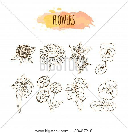 Hand Drawn Flower Set. Floral Illustration. Sketch of Lily, Chamomile, Daisy, Viola, Hydrangea and Iris