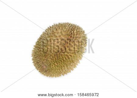 durian with shell King of fruit on white background.
