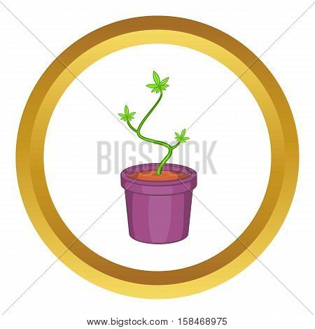 Marijuana or cannabis in flower pot vector icon in golden circle, cartoon style isolated on white background