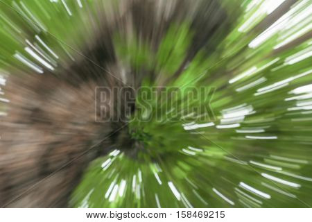green of tree blurred background speed lens zoom effect