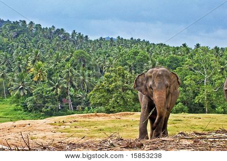 Big Elephant In The Wilderness