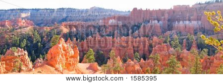 Forest Of Red And White Peaks, Bryce National Park, United States, Panorama