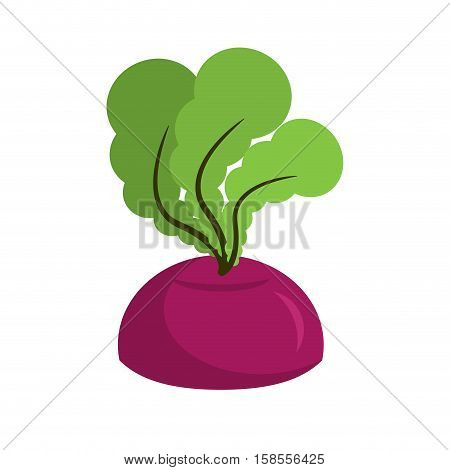 Beet Growing Isolated. Fresh Vegetables On White Background