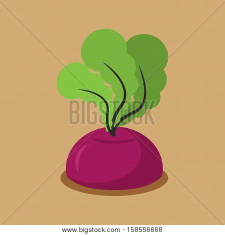 Beet Growing Isolated. Fresh Vegetables In Garden