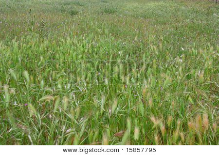 Windy Grasslands