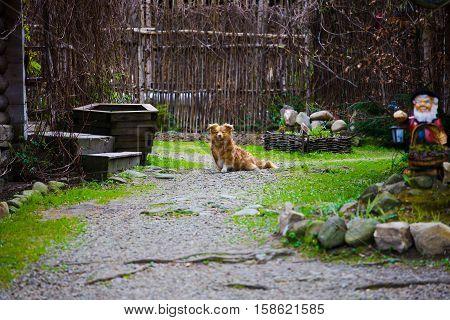 Dog Sitting In The Yard.