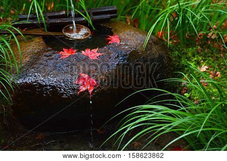 Red autumn maple leaves rest on a tsukubai, or washbasin, at a Japanese temple