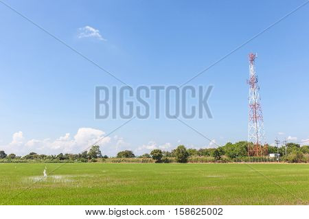 Beautiful scene of rural farmland with telecommunication tower concept of communication.
