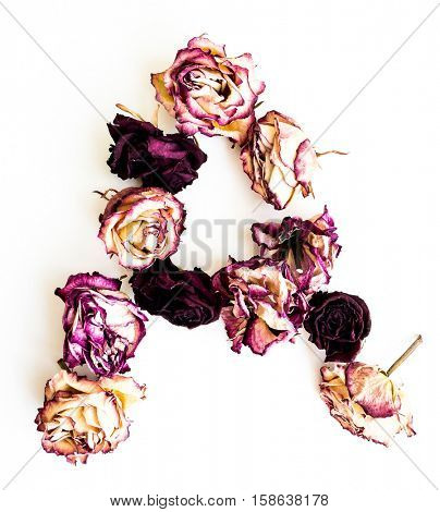Rose dried Initials letter A.