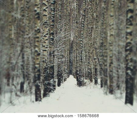 Winter forest in snow minimalism style hues nature trees wallpaper view background