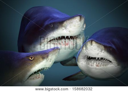 Sharks have a fun and waiting for divers and swimmers. Underwater photography from ocean.