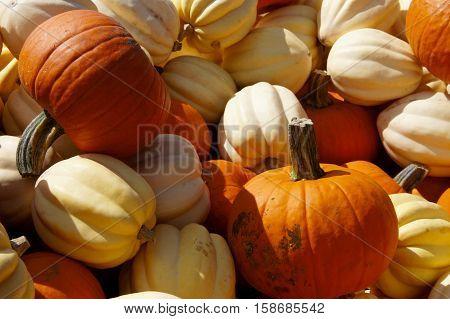 Pumpkins and White Squash at the Farmer's Market