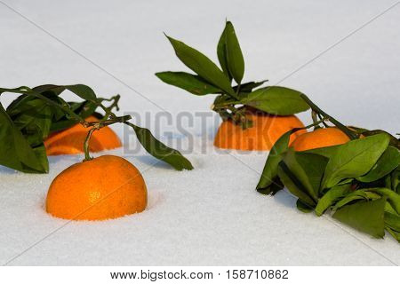Tangerines lie in the snow. Tangerine is a symbol of the Chinese New Year