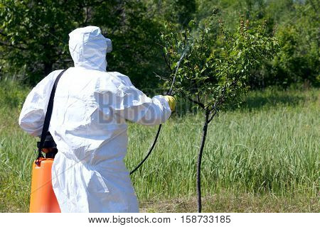 Man spraying toxic pesticides or insecticides in fruit orchard