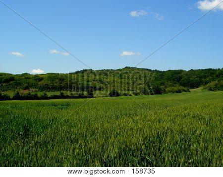 Landscape....(2)