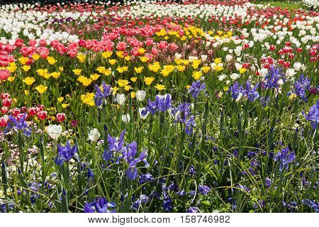 Various Flowers In Full Bloom