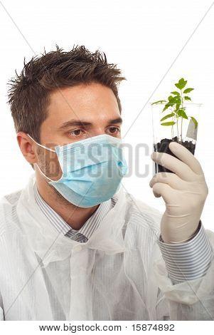 Mann prüfen neue Tomate-Pflanzen