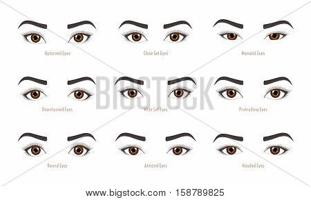 Various types of woman eyes. Set of vector eye shapes. Collection of illustrations with captions. Makeup type infographic. Different - close protruding hooded almond upturned on white background.
