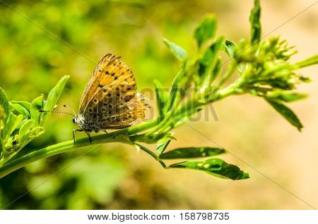 brown butterfly with broken wings in summertime