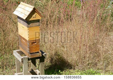 Man Made Wooden Beehive on a Platform