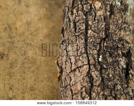 Texture of tree bark. Wood texture background pattern crack old brown. Bark is looks rough.