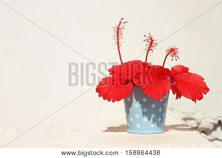 Bright red tropical flower (Hibiscus) in vintage polka dot blue tin basket, white concrete background. Decor on Sunlit porch. Empty space.