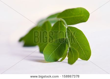 Moringa Leaf Isolated On Wooden Board Background