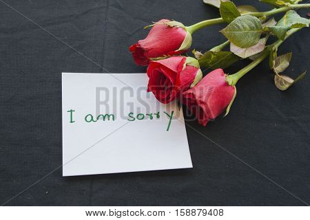 i am sorry messages card with red rose background black