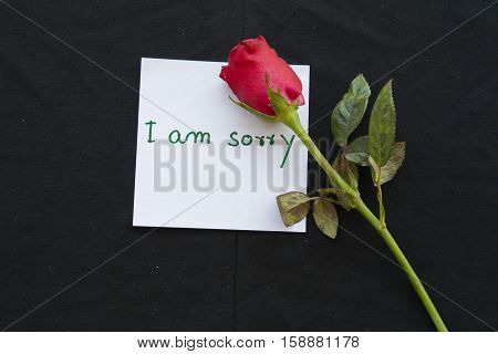 i am sorry messages card with red rose on background black