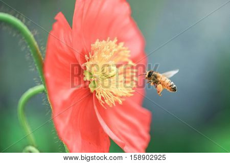 close up of a bee flying to flower