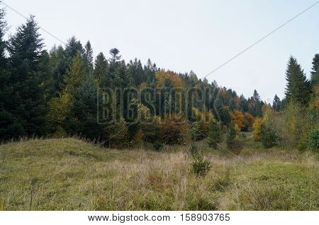 Mountains covered with forests with green fir and yellow deciduous trees under blue sky and white clouds