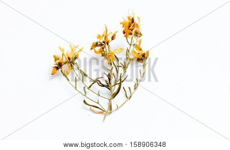 picture of a Perforate St Johns-Wort Flowers on White Background