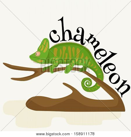 pet chameleon for home, lizard and reptile isolated vector illustration pictograms