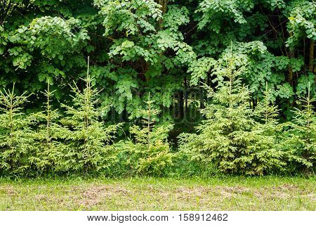 Green grass green hedge and green trees background