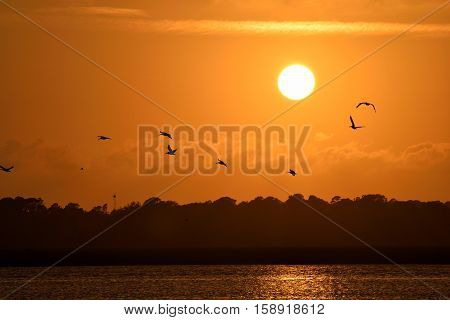 Pelicans flying over the river at sunset Florida, USA.