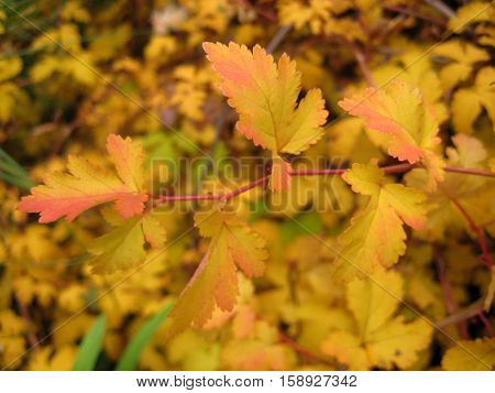 photo of autumn yellow hues of the leaves as the source for printing and design