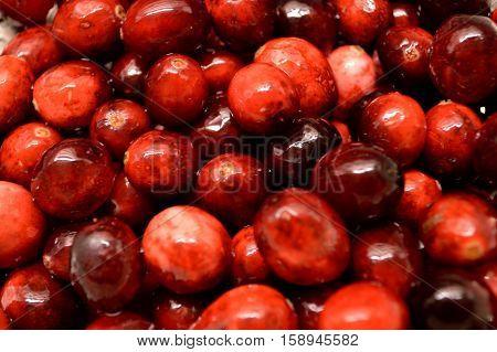 Cranberries Close-up