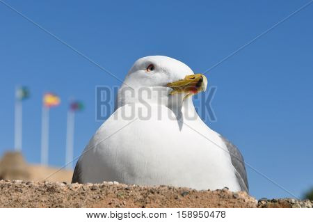 gull siting on stone wall against blue sky