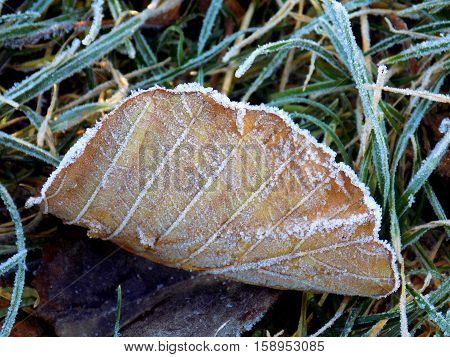 Frost on leaf on deciduous tree during winter