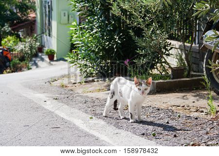 Lovely white cat on the road in sunny greek day. Amouliani Island, Chalkidiki, Northern Greece