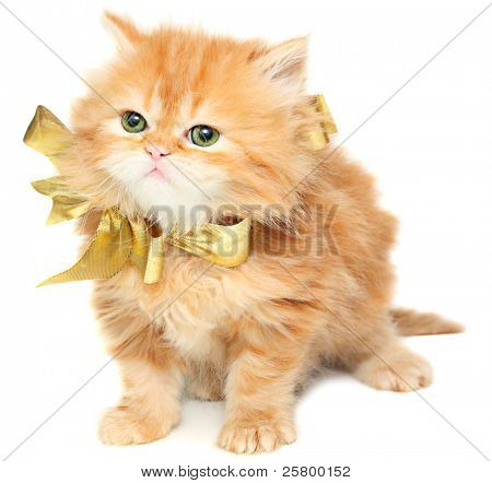 Red kitten with gold bow on a white background